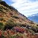Auf dem Weg zur Alpe Albezzona.