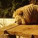 während er seinen Mittagsschalf in der Sonne hält