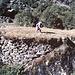 <b>Praticello pensile.<br />Prato per qualche gerlata di fieno o piccolo orto, che fosse al sicuro dall'invasione di capre o pecore.<br />La terra è stata portata sul macigno a gerlate. Spesso sono, almeno in parte, coronati da un muro a secco.<br />In Val Bavona sono stati inventariati 152 prati pensili, per una superficie complessiva coltivabile di 6500 mq. L'oggetto di maggior estensione, situato a Gannariente, aveva una superficie di circa 500 mq. La superficie media è di 40 mq. </b>