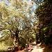Anette und die Waldelfe wandern aus Stauf hinaus und in den Wald hinein.