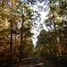 Der Adolf-von-Nassau-Wanderweg führt durch wunderschönen Herbstwald. Das tut er allerdings nicht immer. Nur im Herbst.