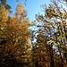 ...durch den schönen Wald bei Eisenberg.