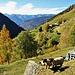 Pecore dalla testa nera in Val Malvaglia.
