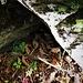 Una vipera si nasconde sotto un sasso.