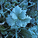 Frostig ist es in den Talböden des Kander- und Kientals