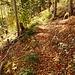 Jetzt auf markiertem Wanderweg hinunter nach Gänsbrunnen