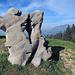 ein schöne Natur-Skulptur, es sieht aus wie zwei Murmeltiere, die auf den Hinterbeinen auf einander los gehen.