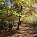 Nel bosco la direzione da seguire è più evidente.
