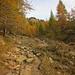 Sentiero 10 direzione Ristoro e lago Muffè.