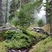 feiner Regen im Wald