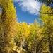 Magico autunno.......