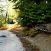 noch auf breitem Forstweg