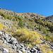 Der 700hm-Hang, hinter dem sich erst die typische Mercantour-Landschaft öffnet.