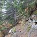 Der gute, alte Weg des Gattertobel-Aufstiegs