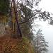 Der schöne, in den Felsen geschlagene Weg zu den Surquellen