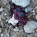 Marder - Fuchs - oder Dachslosung? Sicher Beerenmus