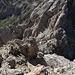 """Corno Grande-Vetta Orientale - Tiefblick am Gipfel in die benachbarte Scharte. Solches oder ähnliches Gelände erwartet Aspiranten für eine Überschreitung des Grates zur Vetta Occidentale. Diese ist zwar relativ """"kurz"""", artet aber zwischendurch unweigerlich in Kletterei aus. Um zur Vetta Orientale zu gelangen, machen wir deshalb lieber den Umweg via Calderone und Conca degli Invalidi..."""
