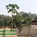 La Arigbo von der Seite