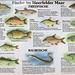 Fish in the Maar (not free)