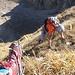 Steilgraskletterei hoch über dem Roten Loch
