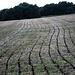 ??? Wir konnten das Geheimnis lüften: Heutzutage werden die Felder geschlitzt, und die Gülle in die Schlitze gepresst. Dann stinkts nicht so.