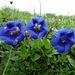 Blumenpracht unterwegs 5