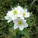 Blumenpracht unterwegs 6