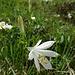 Blumenpracht unterwegs 14 ...