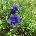 Blumenpracht unterwegs 4