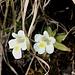 Blumenpracht unterwegs 11