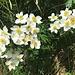 Blumenpracht unterwegs 12