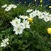 Blumenpracht unterwegs 8