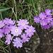 Blumenpracht unterwegs 9