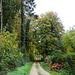 schöner Waldweg oberhalb Rodersdorf