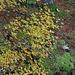 Herbstliches Brüeltobel