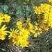 Unerwartete Blumenpracht für diese Jahreszeit