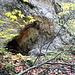 das ist die, in der Karte verzeichnete Grotte, näher kam ich aufgrund der rutschigen Bedingungen nicht. Das Bild ist herangezoomt, deshalb ist der steile Aufstieg nicht zu erkennen.