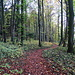 der Wanderweg verlässt den Waldrand