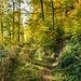 Im Schwendiwald (Wanne): Abzweiger nach rechts