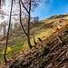 Ausgang des Waldes: Entweder links entlang des Kammes, oder weiter rechts haltend, kann man weiter gehen