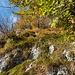 Einstieg Brüggli-Route: Gestuftes Gelände