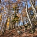 Steiler Wald
