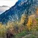 Herbstwälder