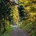 Im Schwendiwald (Wanne)