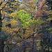 Herbstwald oberhalb von Scharten