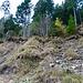 Im unteren Teil, das heisst in den untersten Metern ist der Weg durch Erdrutsch verschwunden.