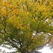 Herbst am Weidbuchenpfad