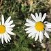 feine Blüten und -Besucher zum Abschluss