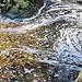 the Hoegne stream