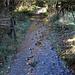 trail in autumn